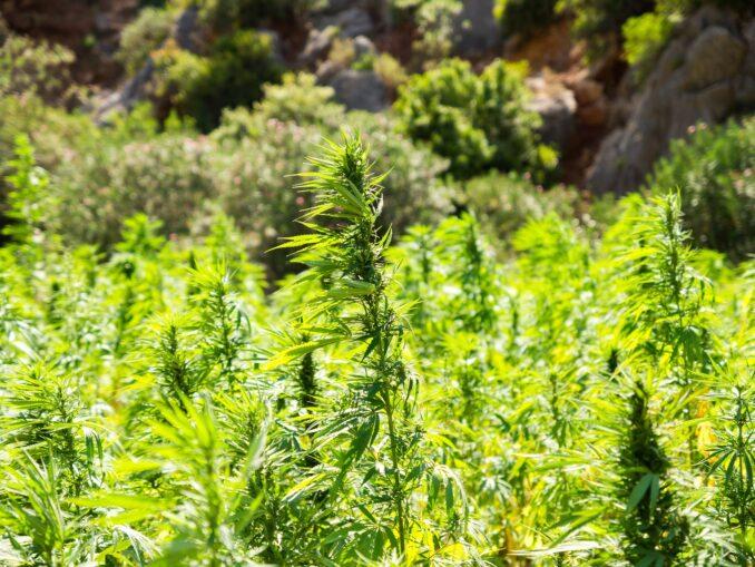 medicina green