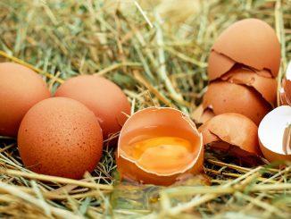 Le uova biologiche per l'alimentazione sostenibile